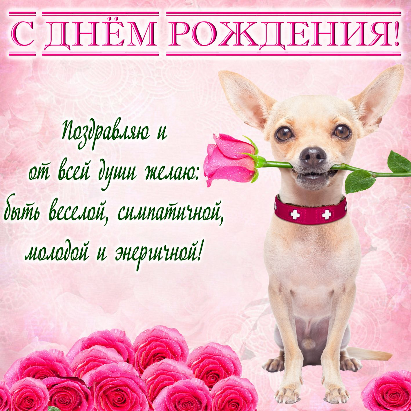 Сладкого, пожелание на открытку девушке