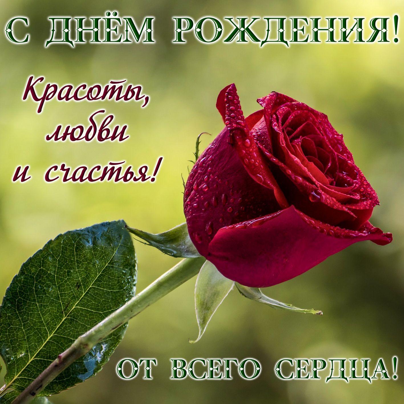 Женщине. Большая красная роза в капельках росы. С Днём рождения! Красоты, любви и счастья! От всего сердца!