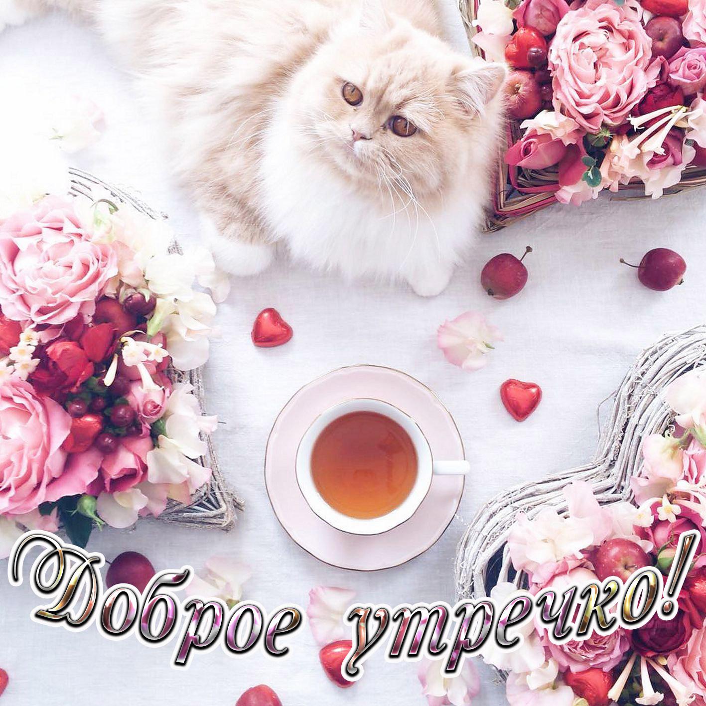Доброе утро с картинками котят