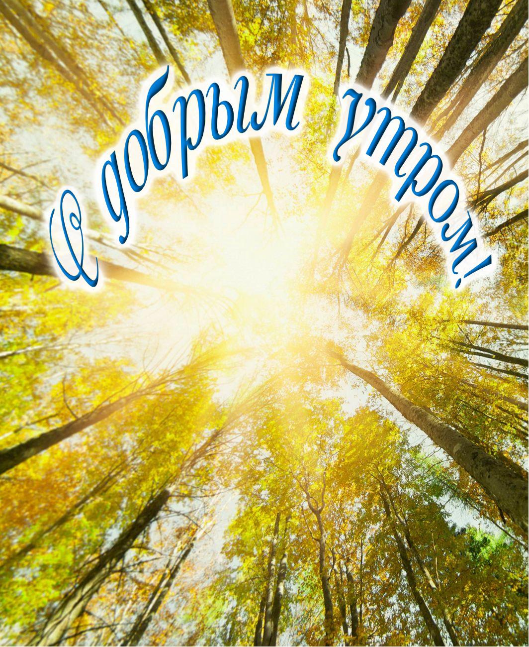 открытки с летним добрым утром с природой возможности программы