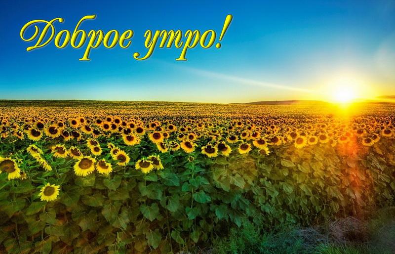Красивая открытка с добрым утром. Голубое небо над полем подсолнухов. Доброе утро!