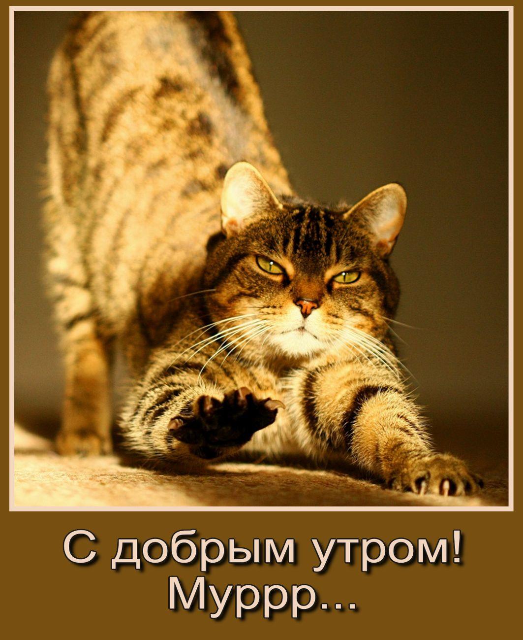 Доброе утро картинки прикольные с котами и надписями