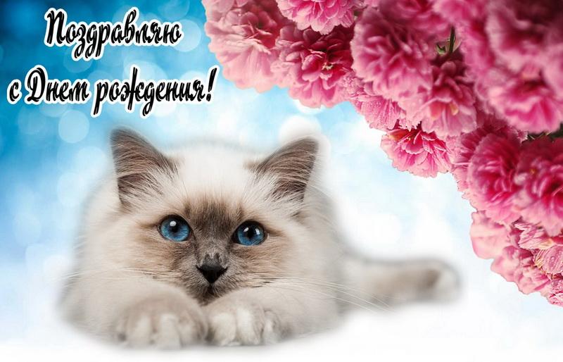 Картинки с котиком с днем рождения