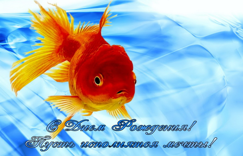 Открытки с днем рождения золотая рыбка, картинках