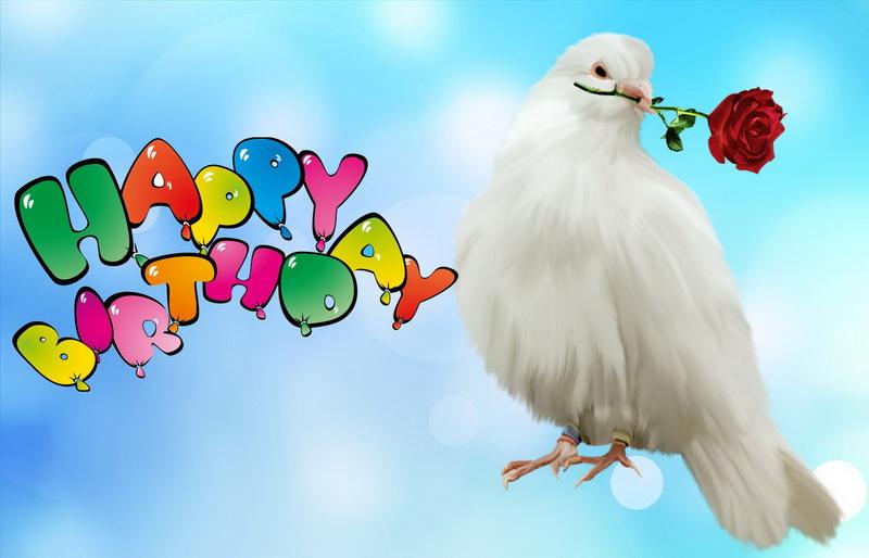 Картинка с днем рождения чайка