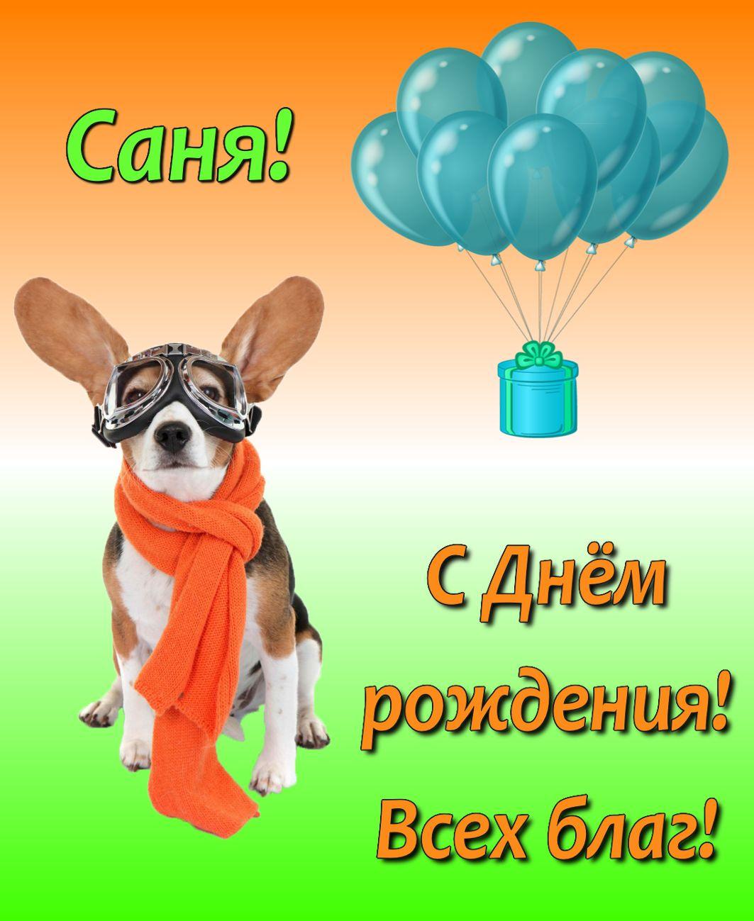 Открытки для сани с днем рождения, открытки пожеланиями
