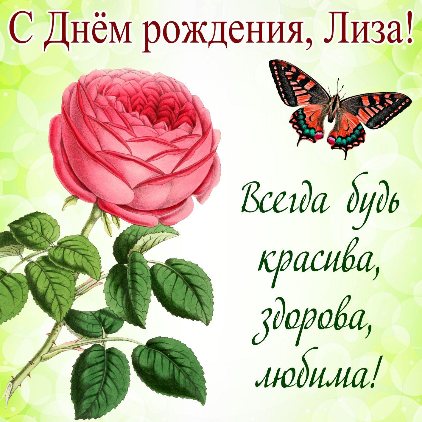 Бабочка над розой на День рождения Лизе
