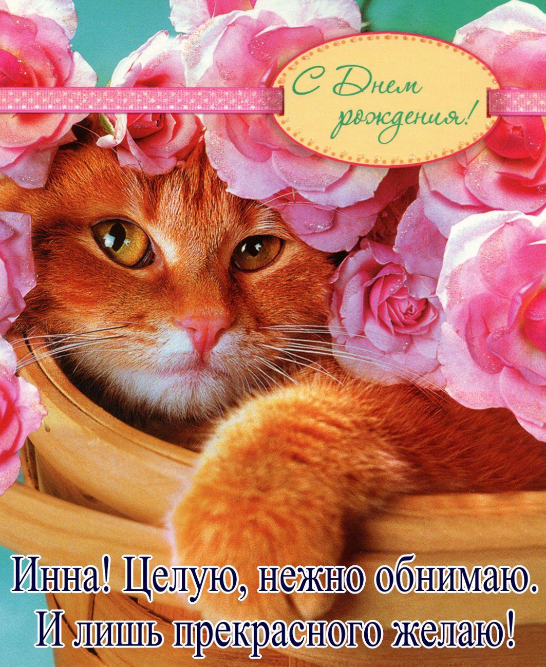Картинки первой, с днем рождения открытка кот одноклассники