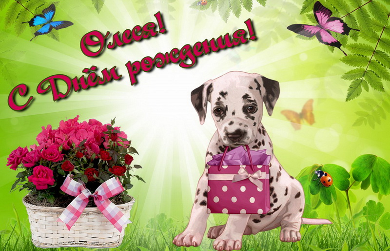 Картинки, картинка фото поздравление с днем рождения по имени олеся