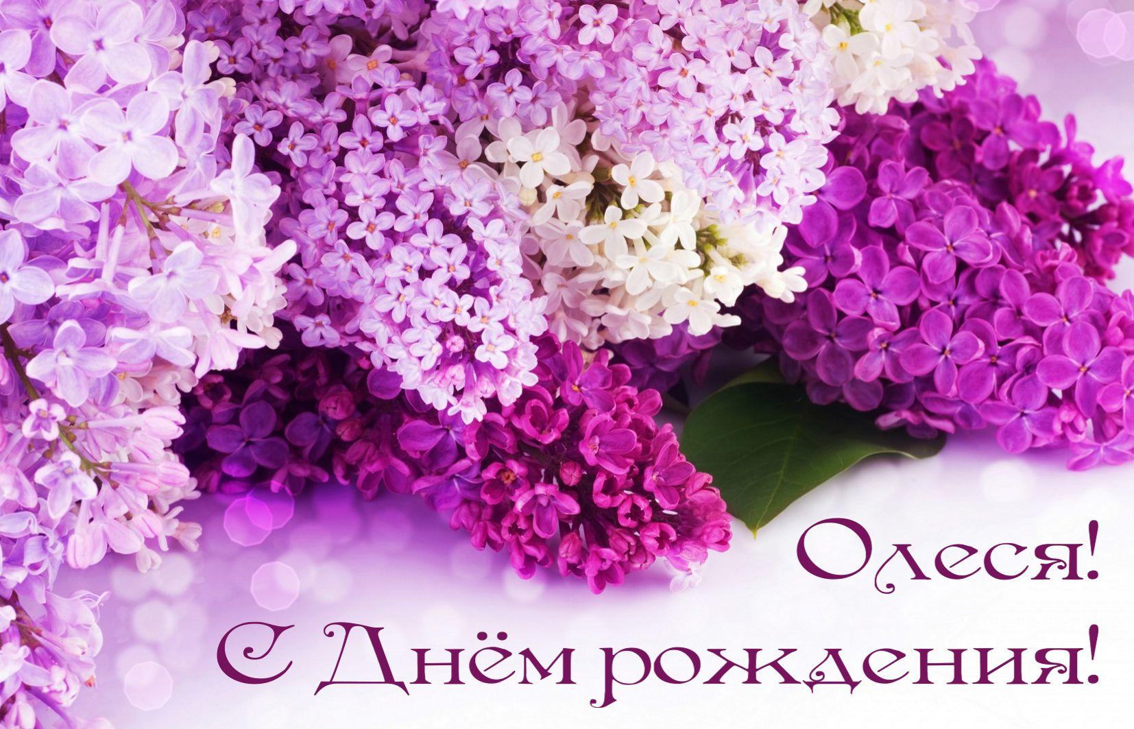 С днем рождения олеся красивое поздравление в картинках