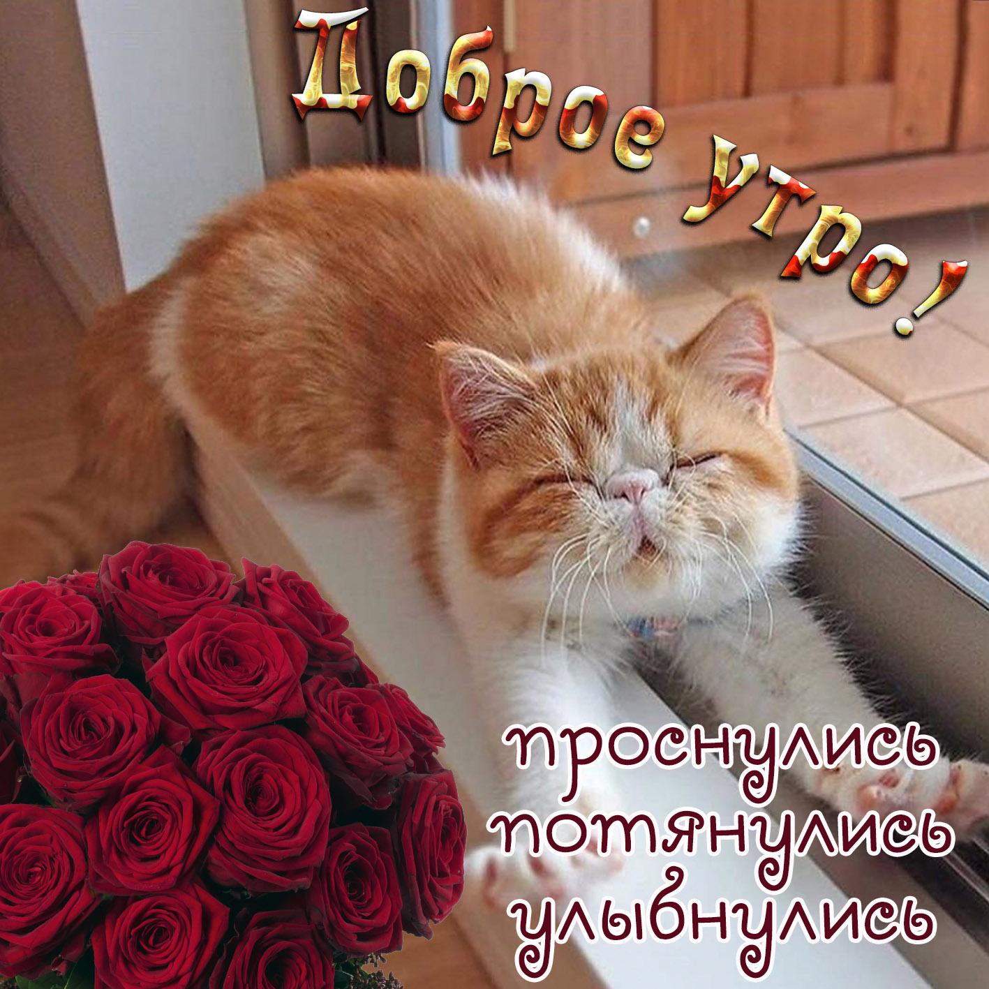 Картинки с котами с надписями доброе утро