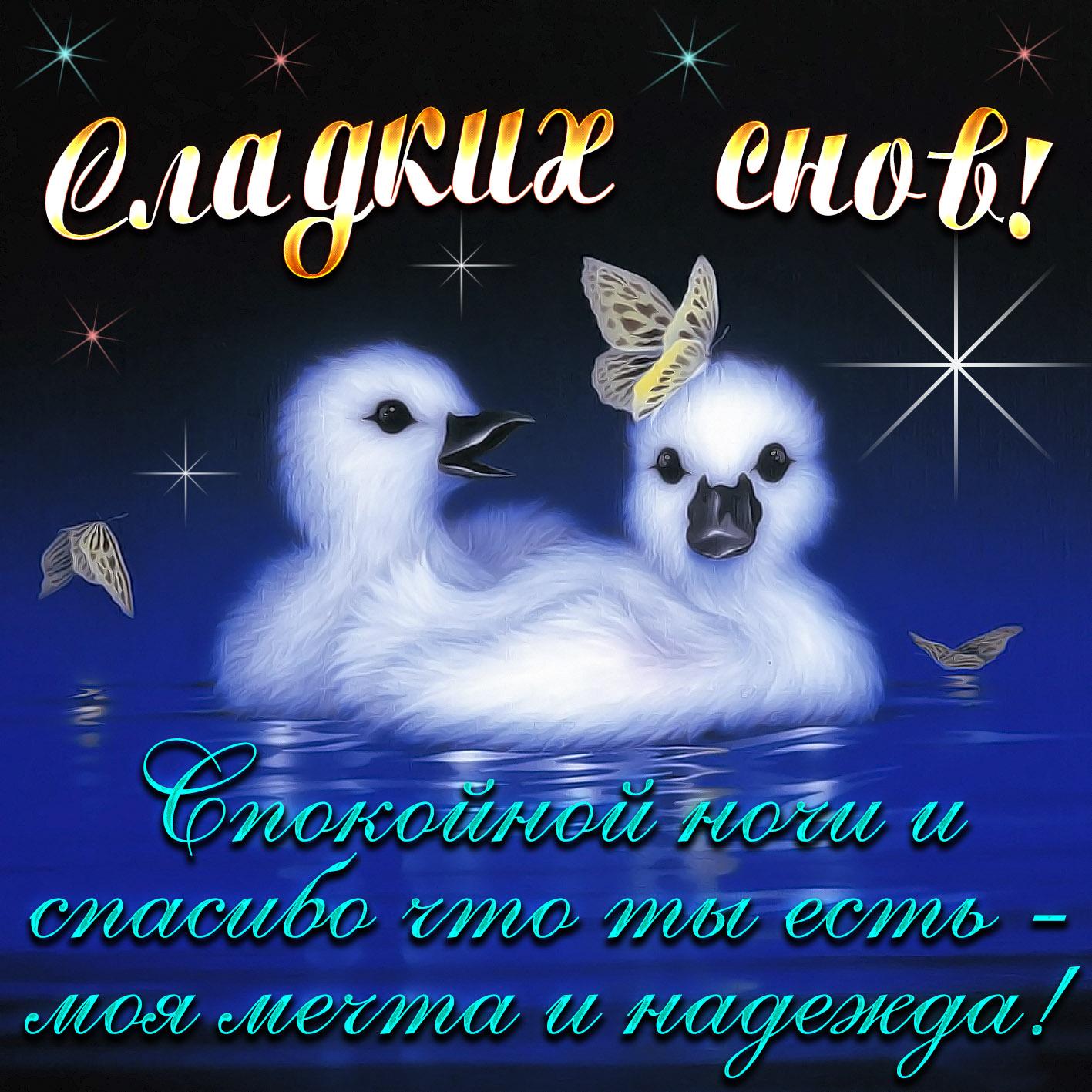 Открытки доброй ночи сладких снов любимая, картинки