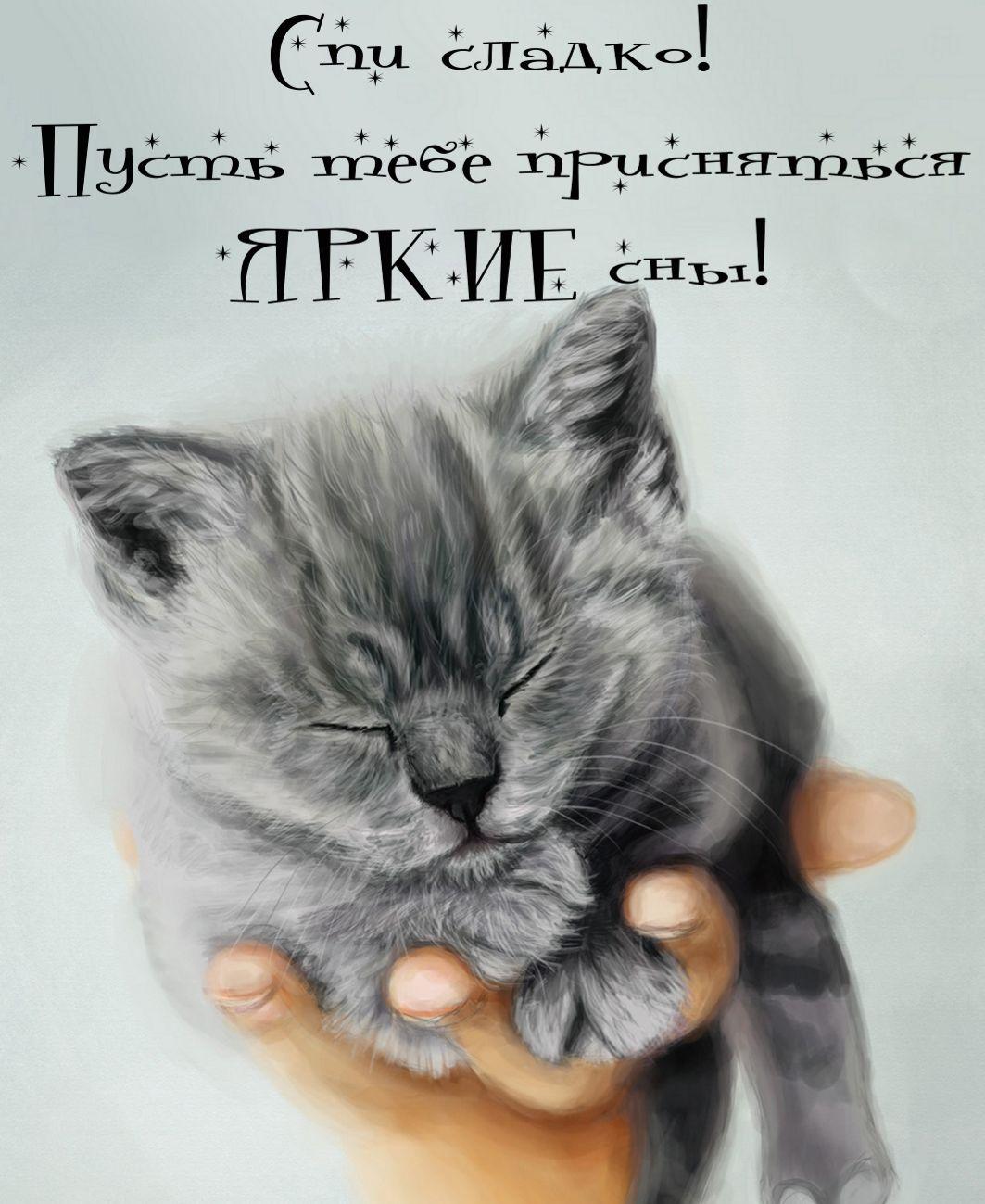 Картинки спокойной ночи кошка, добрым утром
