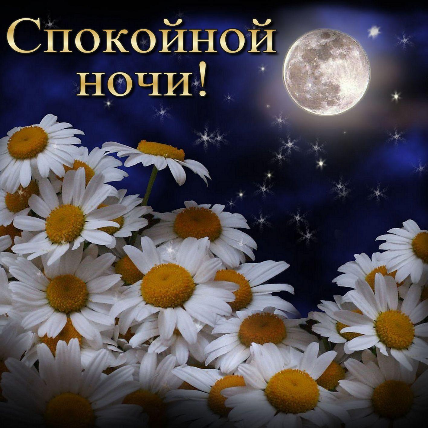 Открытка цветы доброй ночи