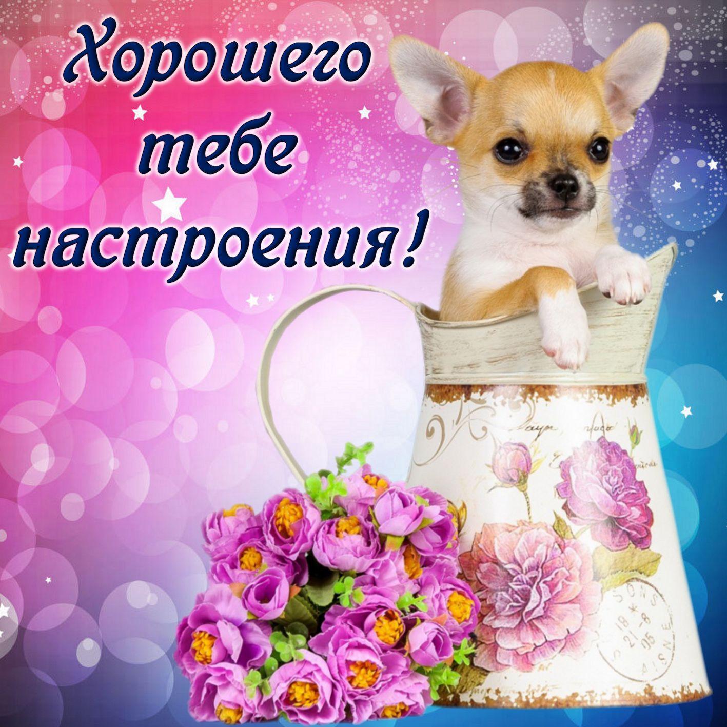 Победу открытки, картинка с пожеланием хорошего настроения