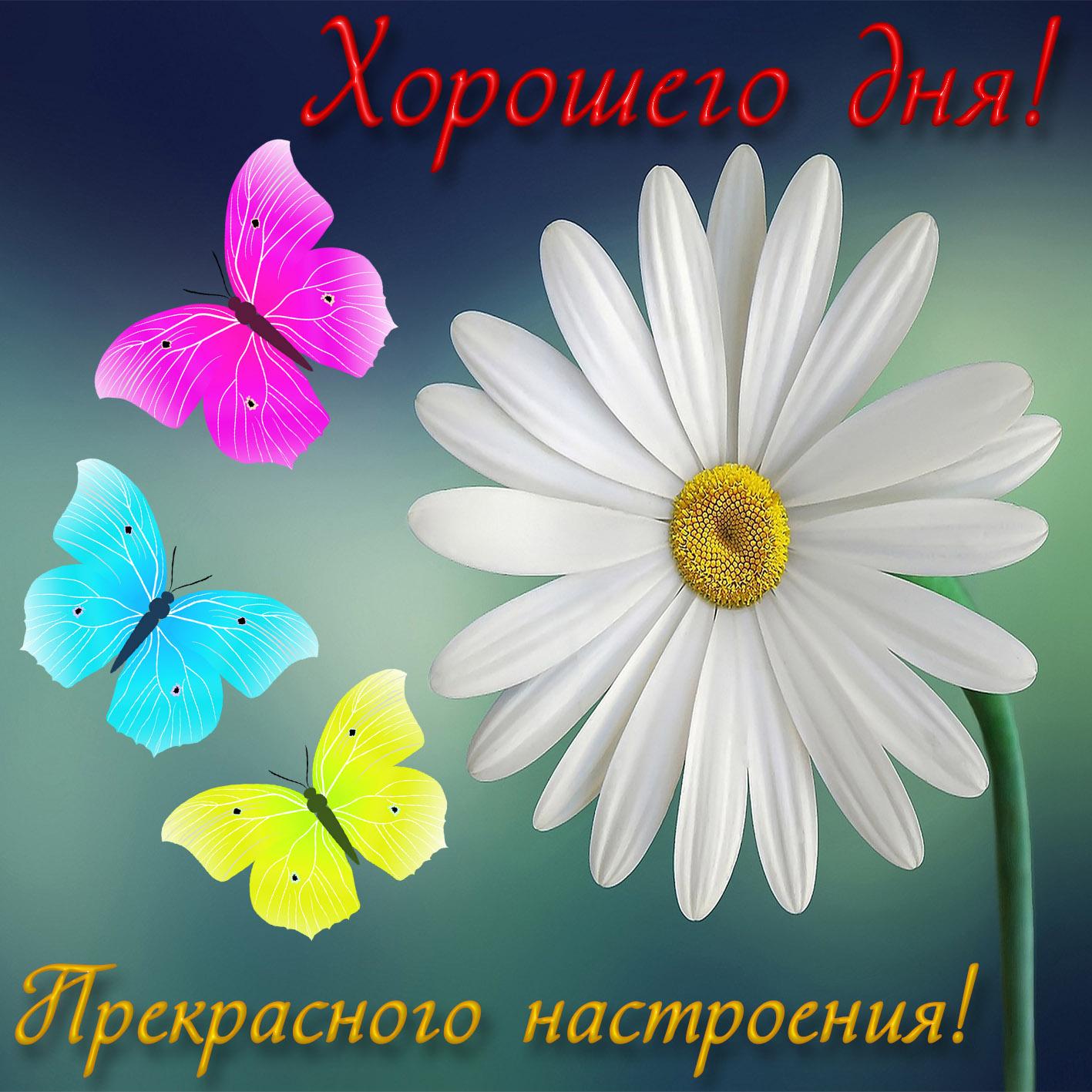 Роза, открытки хорошего дня и прекрасного настроения прикольные