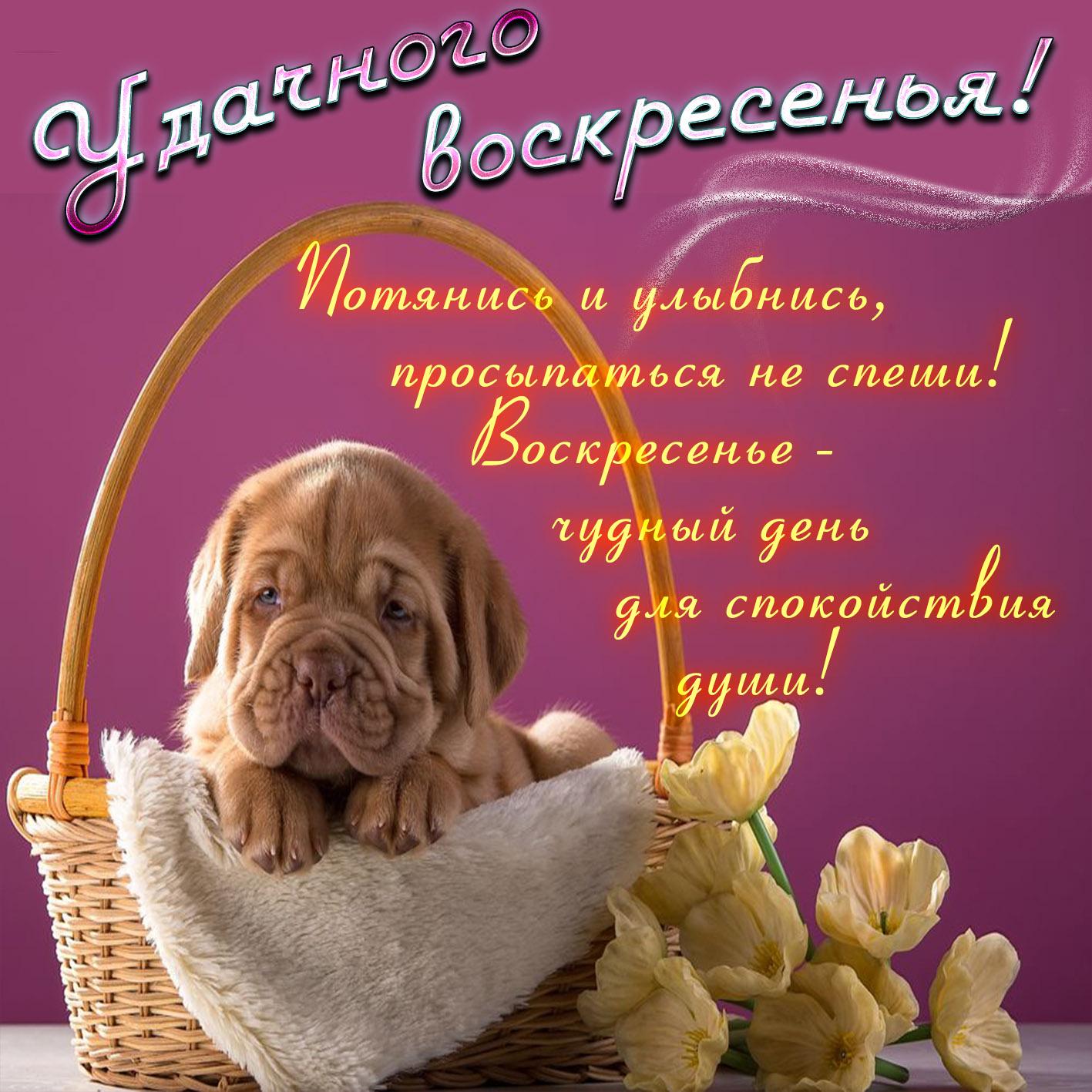 Приятного воскресного дня открытки красивые, поздравления отцу днем