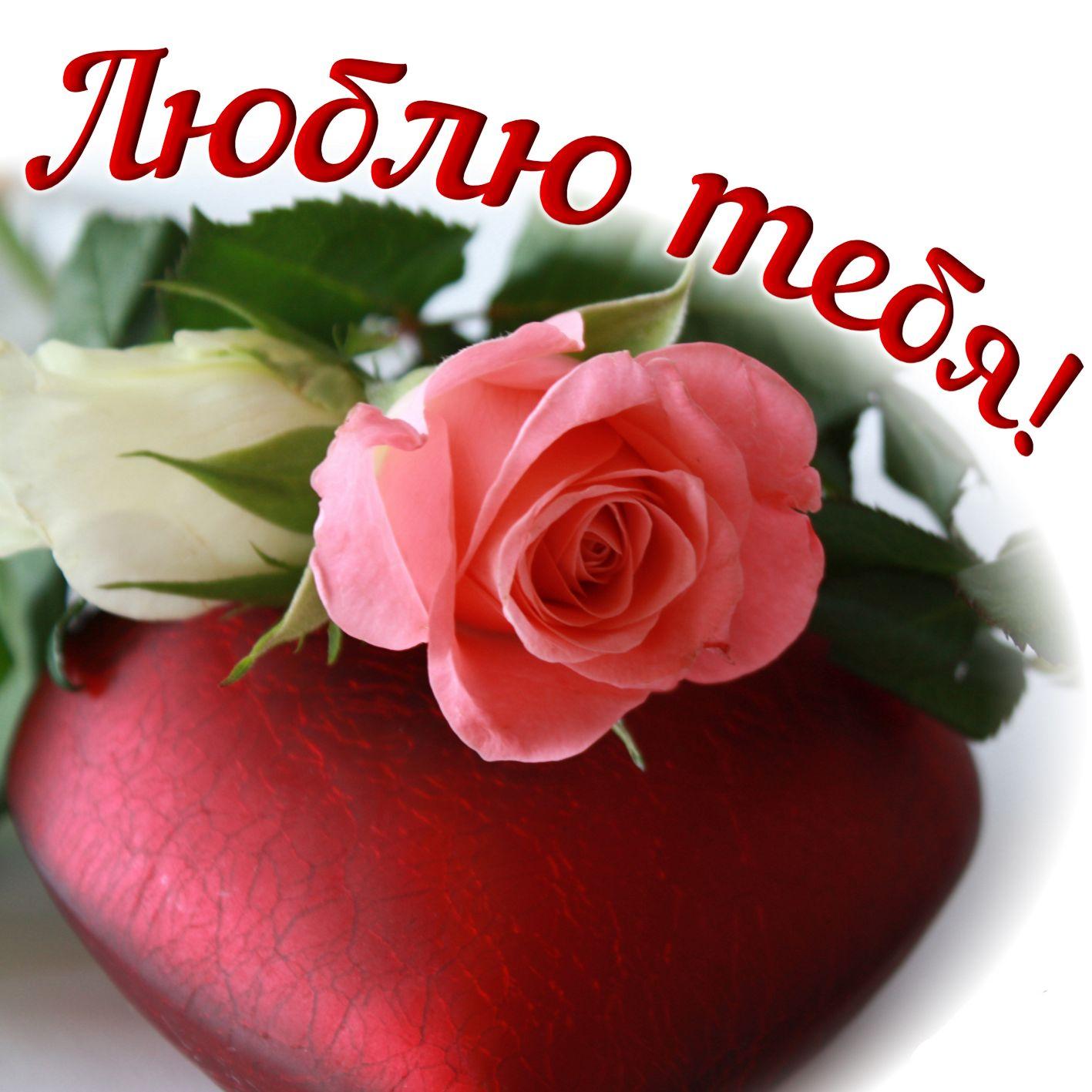 Мира, открытки я тебя люблю с розами