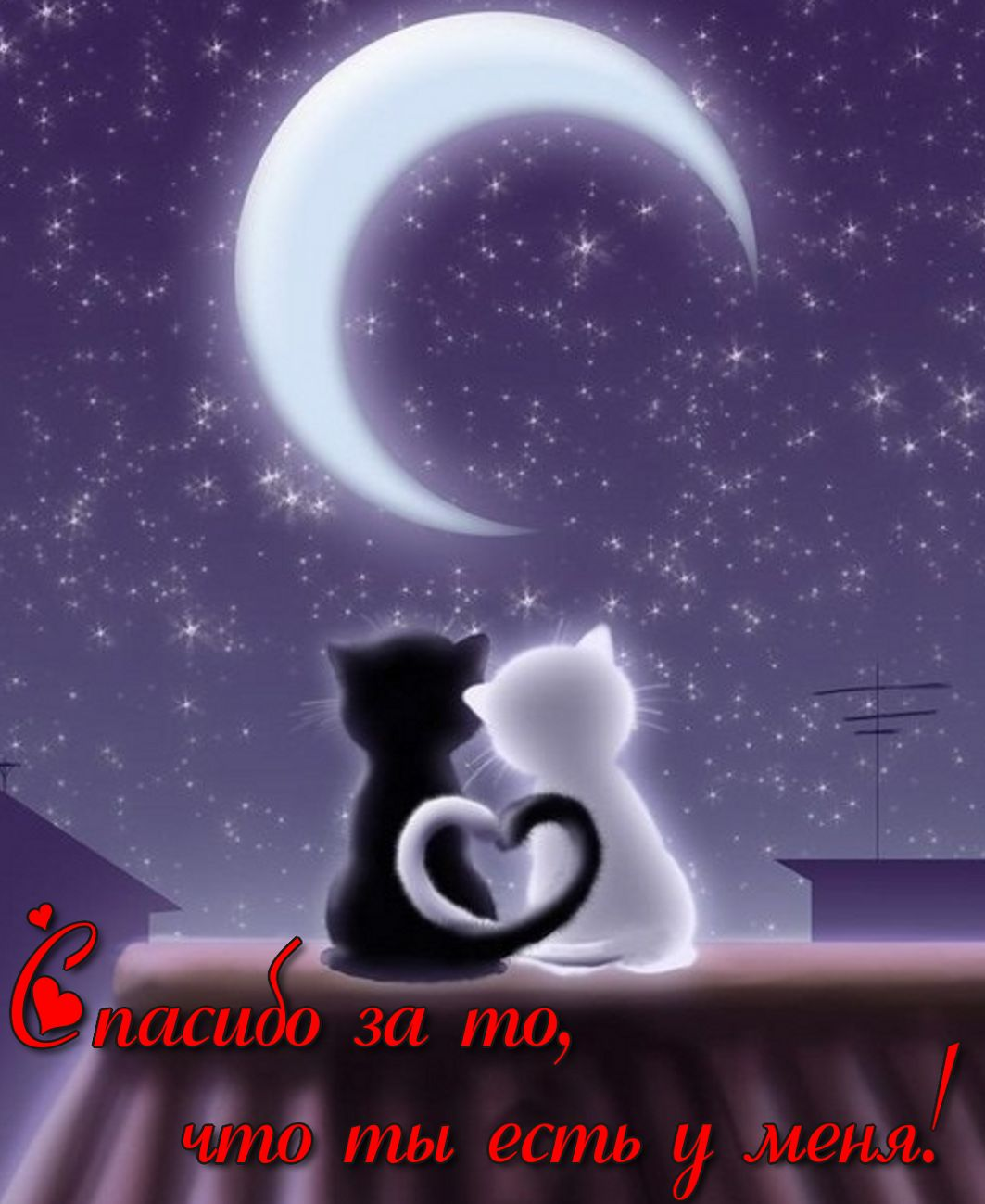 открытки с котиками любимому любите