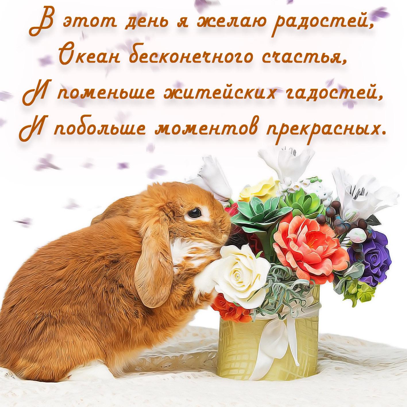 фотографии или поздравление кролика вибер с днем рождения сразу оказать первую