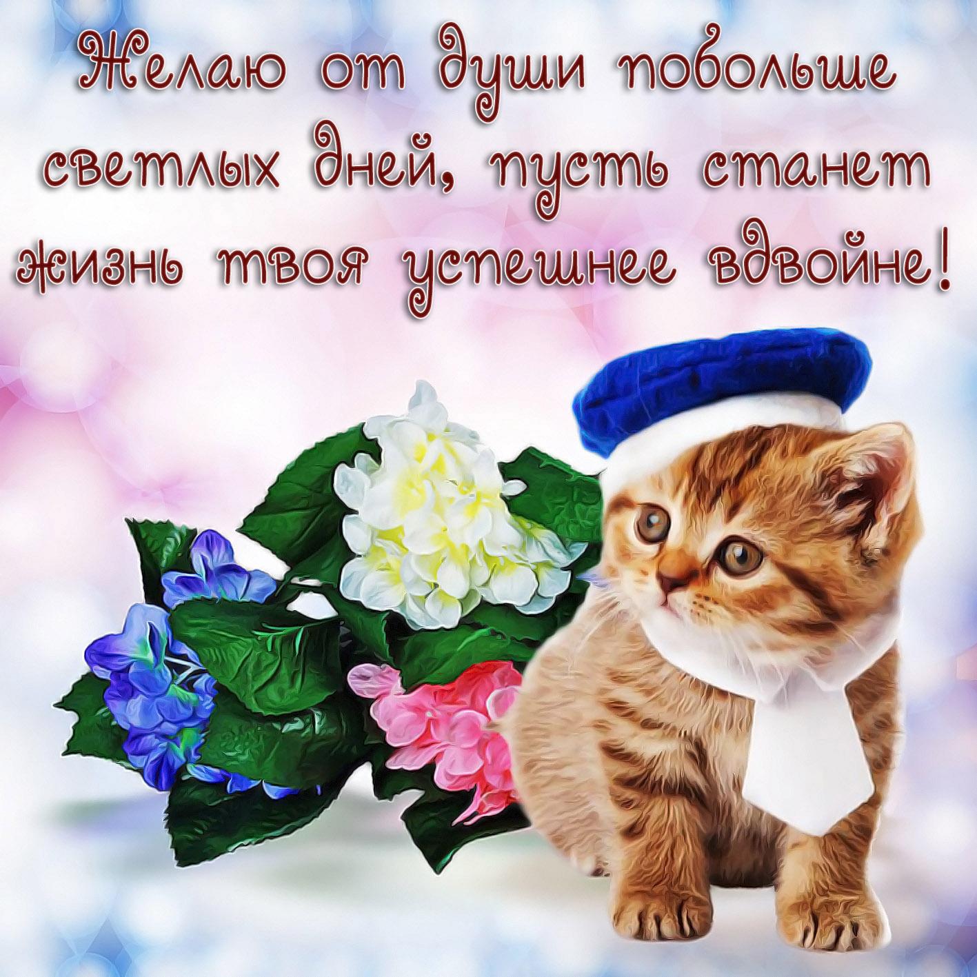 Картинки удачного дня котик