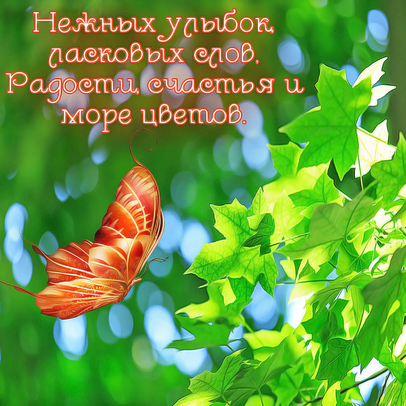 открытки с природой пожелания доброго дня