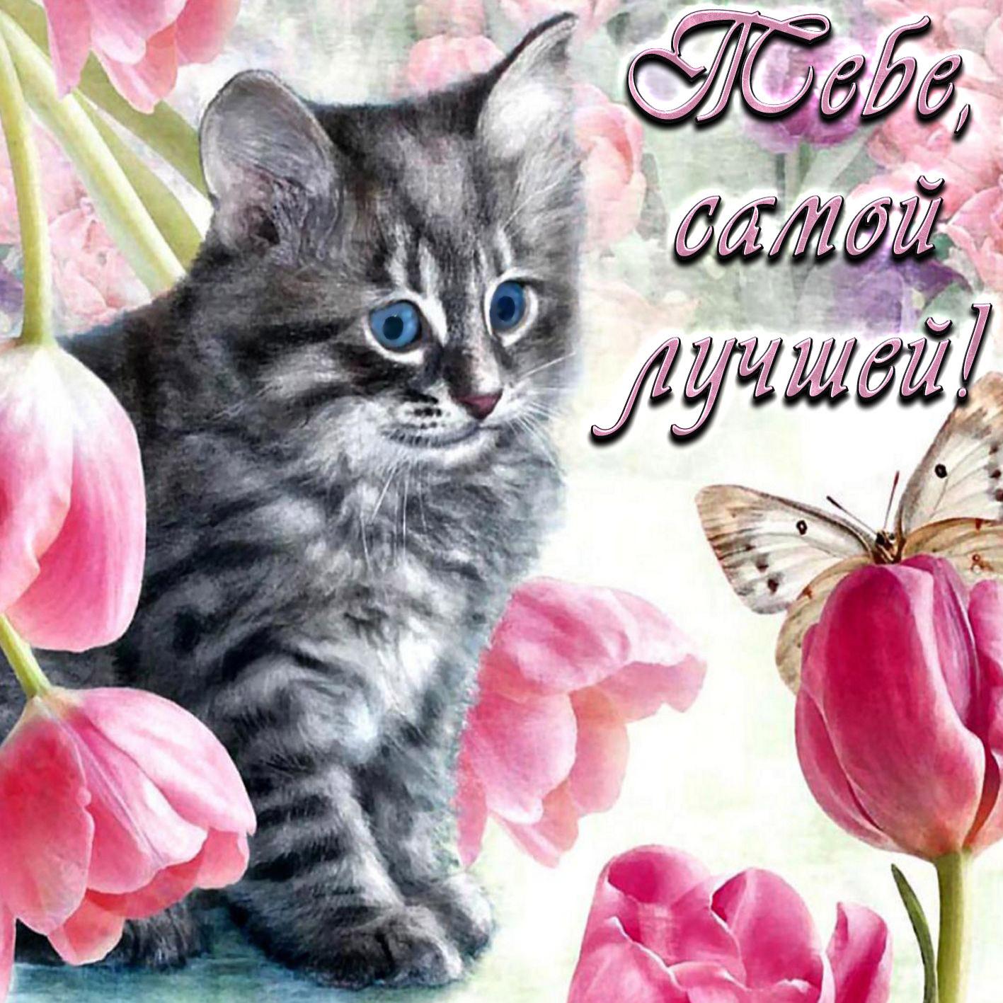формируют открытки с самыми красивыми котятами вам