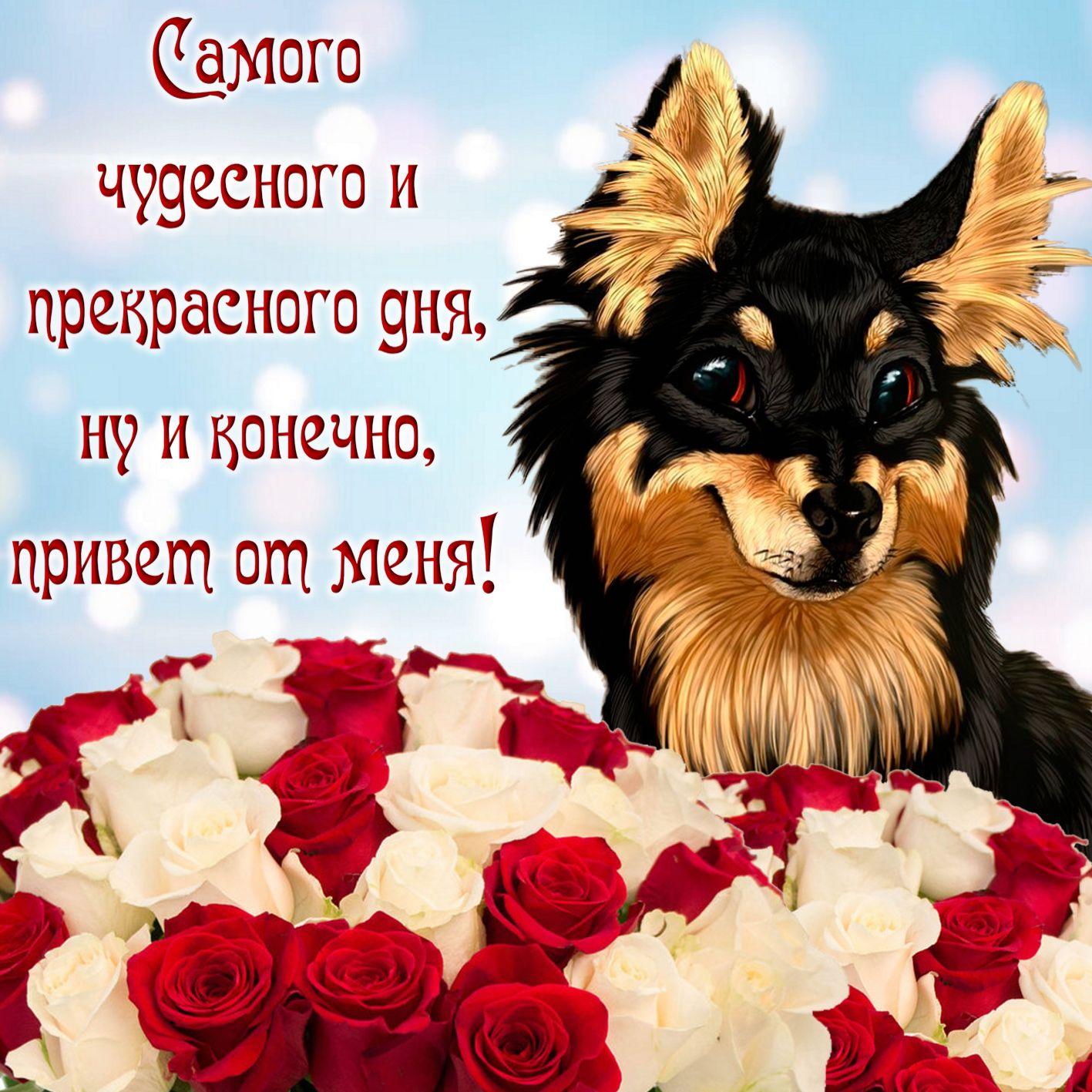 Милая собачка желает чудесного дня