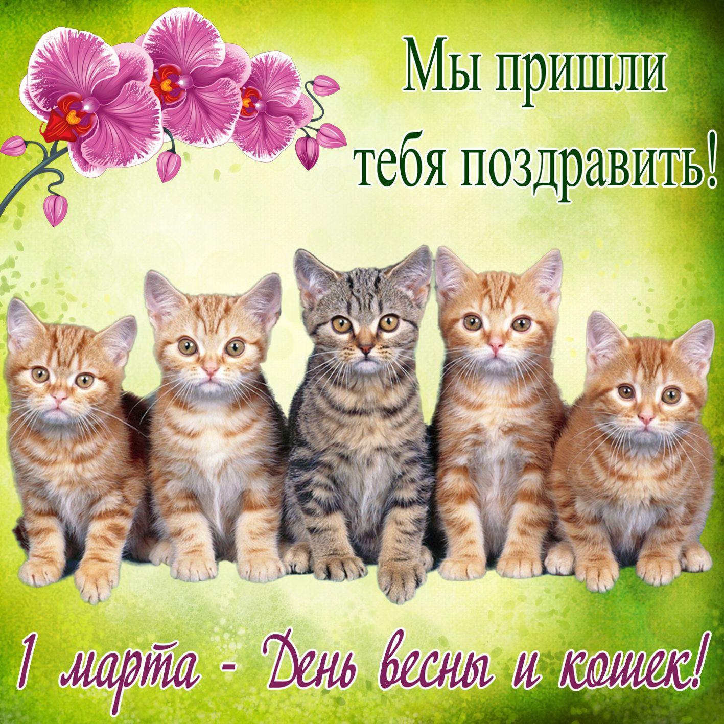 нашего отца поздравления с всемирным днем кошек 8 августа здания провели