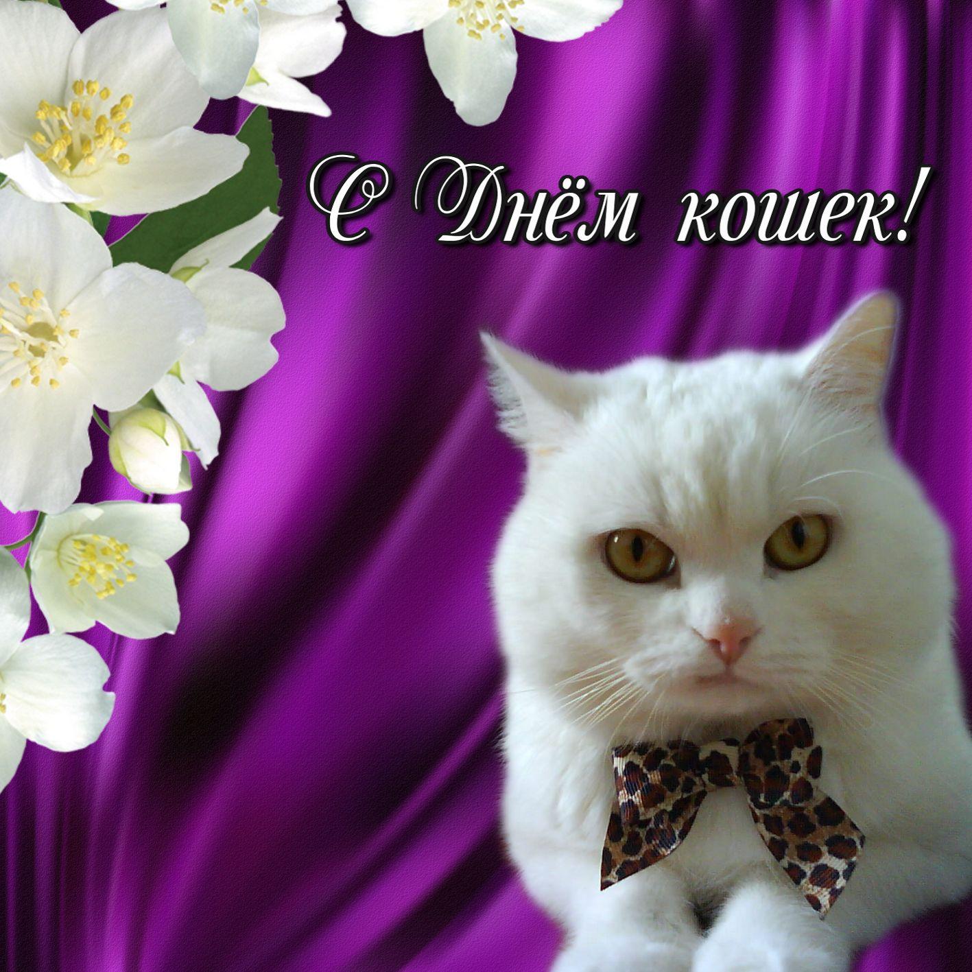 Международный день кошек 8 августа картинки со стихами, день