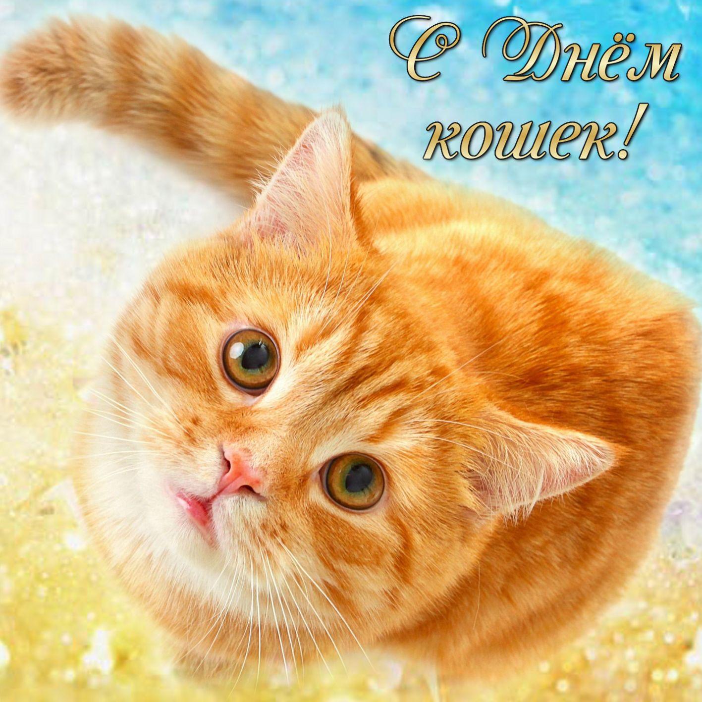 с днем кошек открытки с приколом