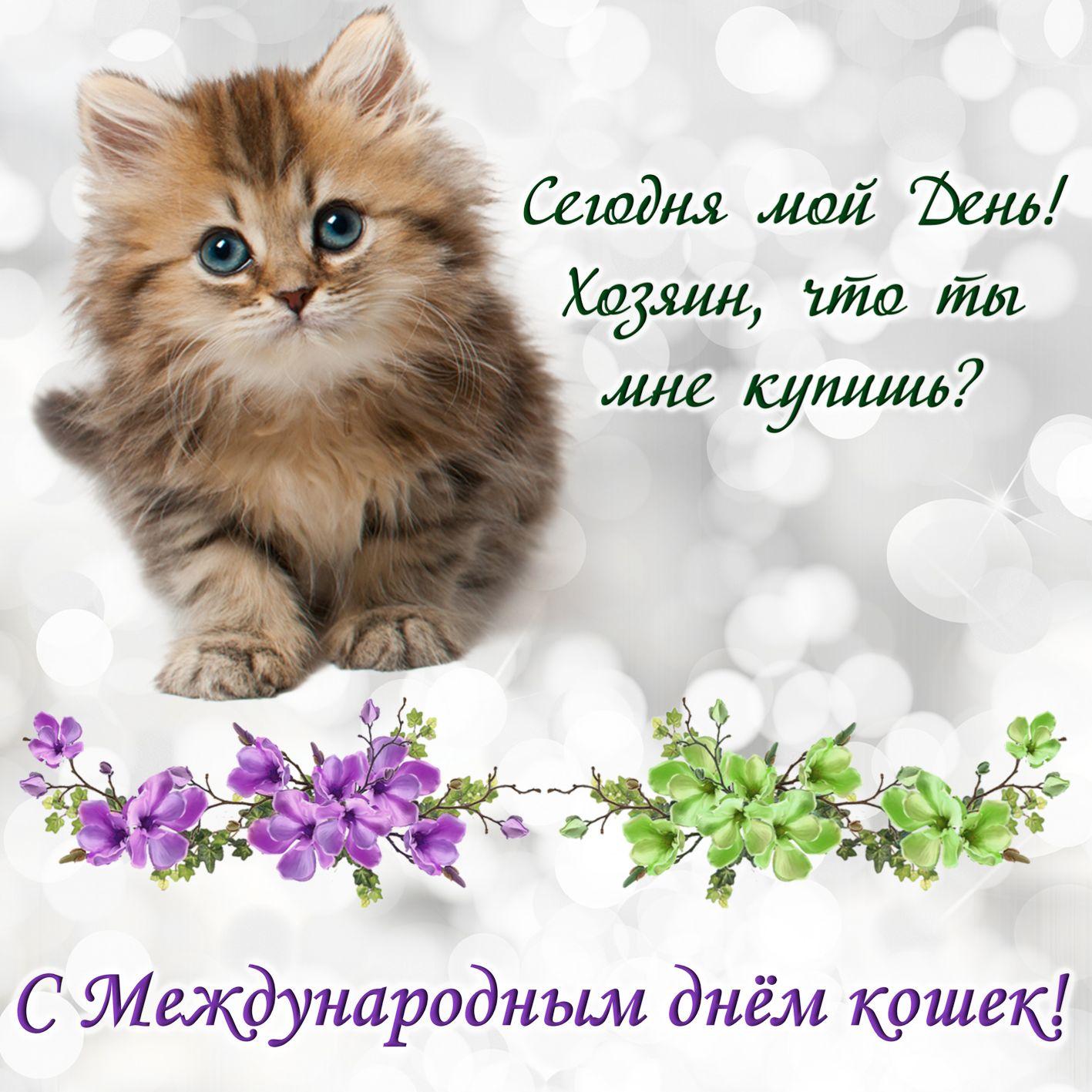 Международный день кошек 8 августа картинки со стихами