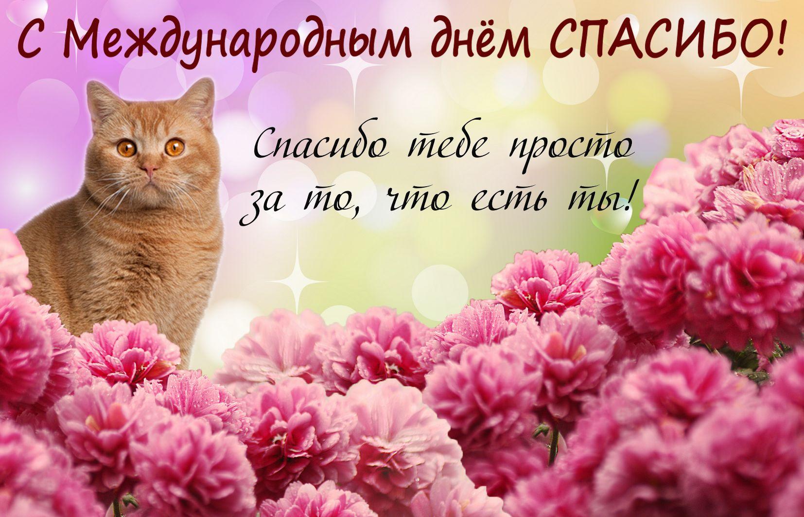 Открытка на День спасибо - красивый котик на фоне розовых цветов