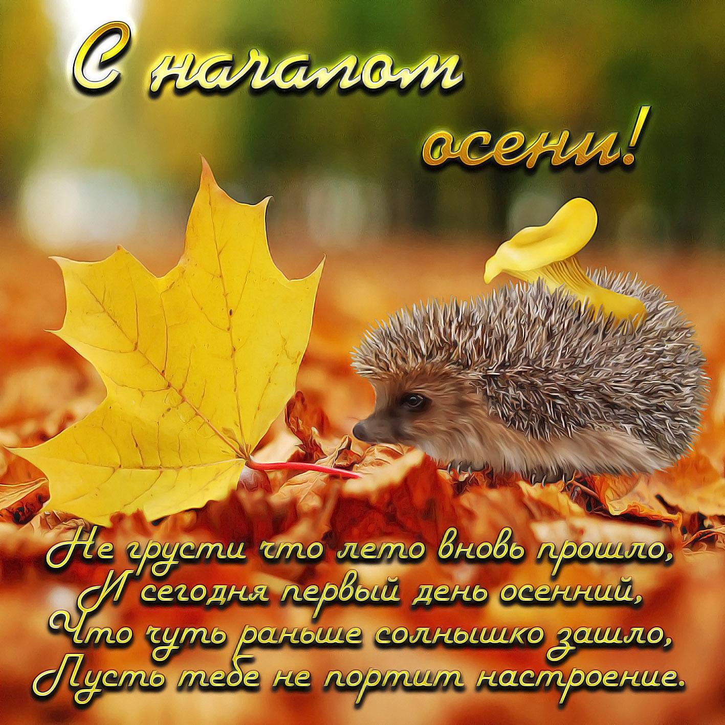 картинки стихи доброе осень вас получатся очень