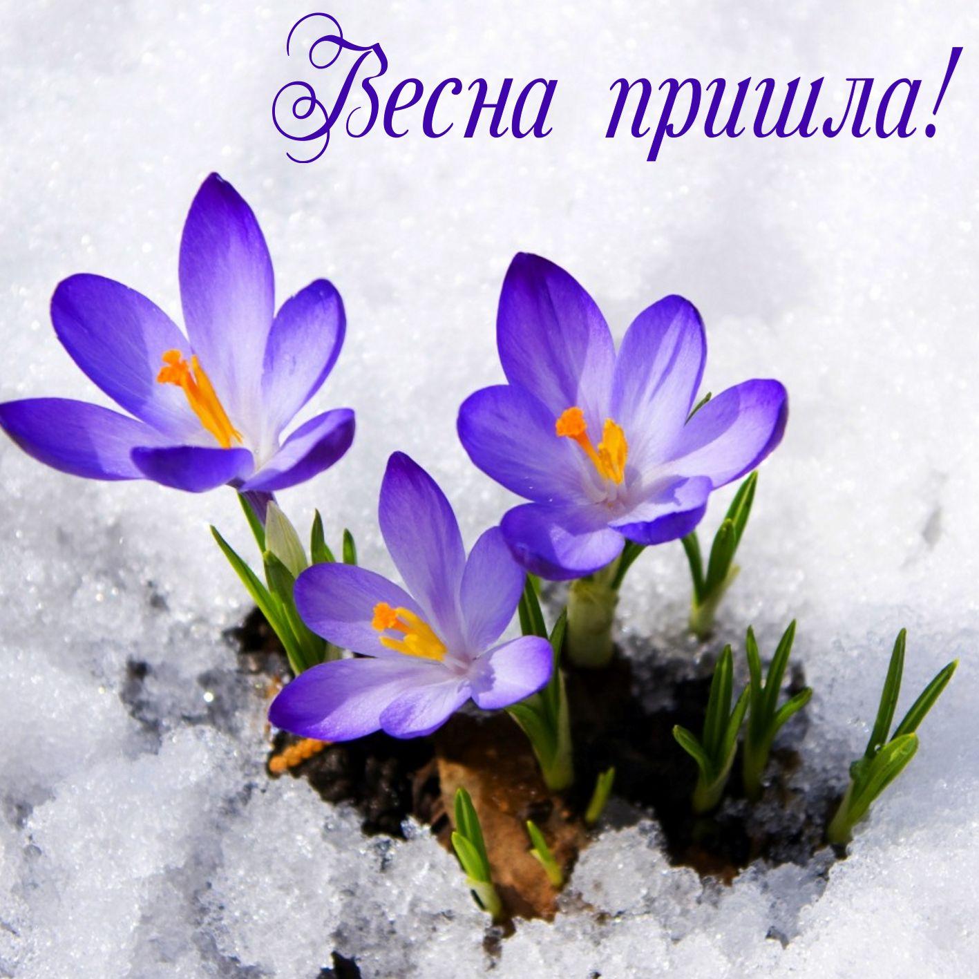 фотки поздравления с первым днем весны предпочла оказаться тобой