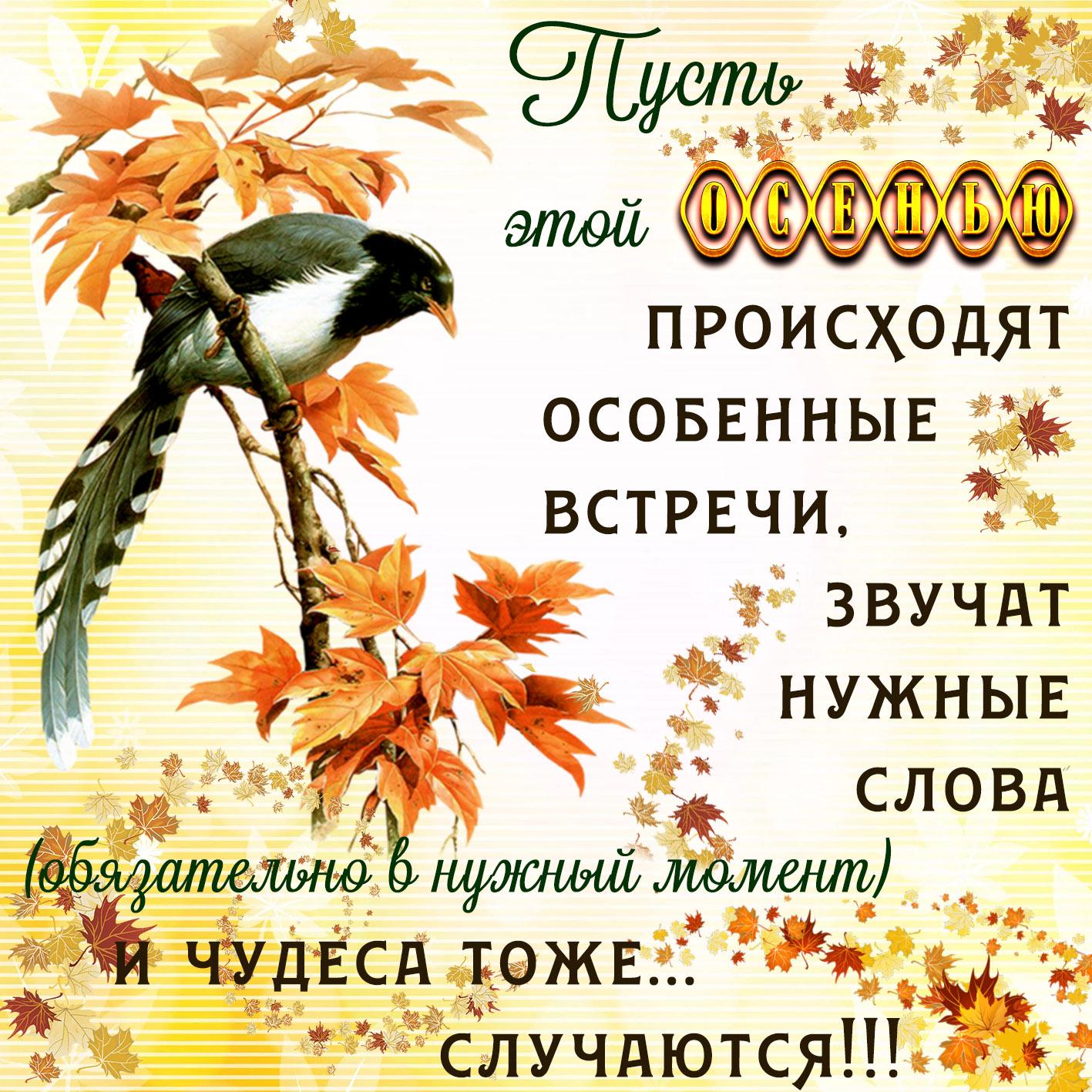 Днем, красивые открытки с пожеланием осени