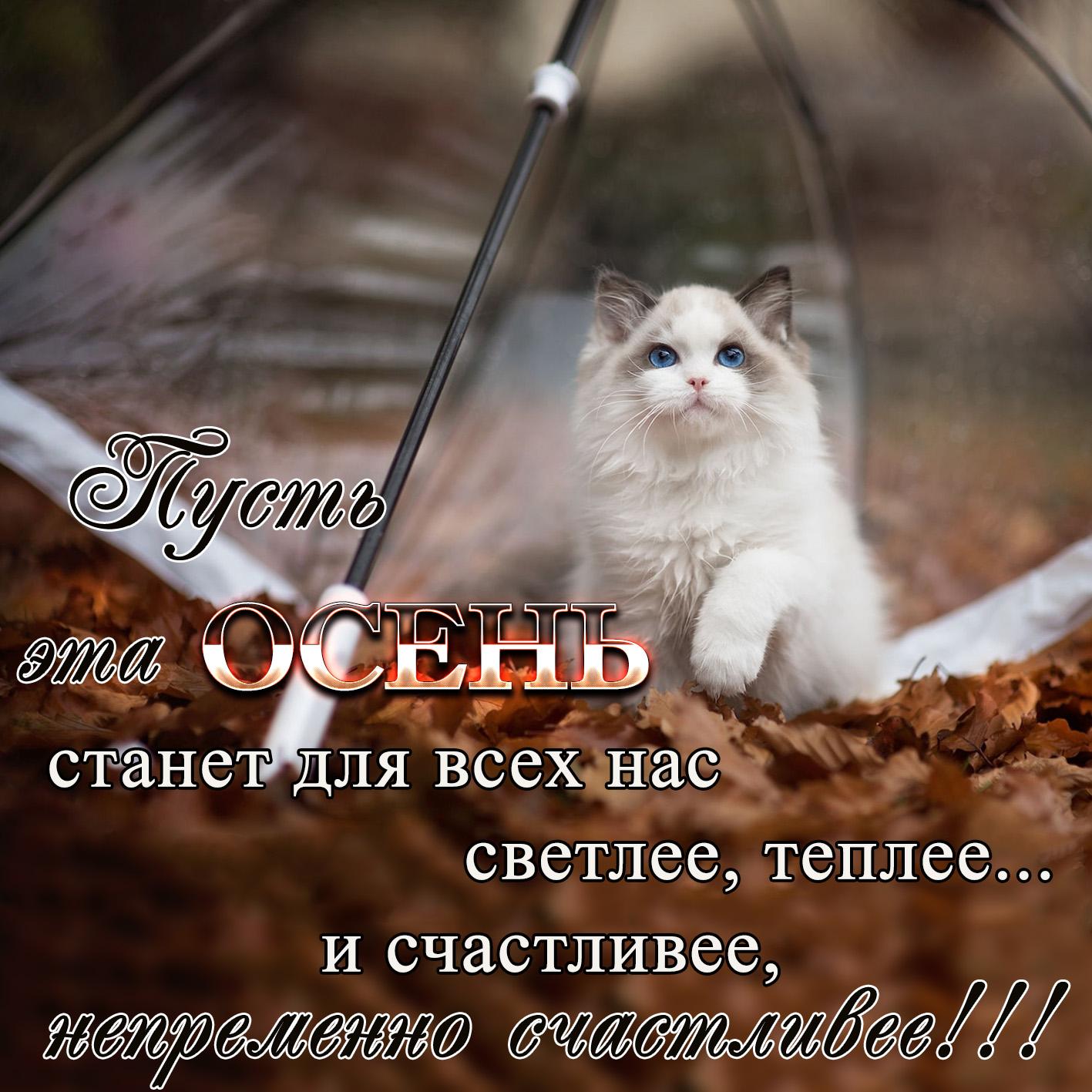 Открытка с красивым котиком под зонтом осенью