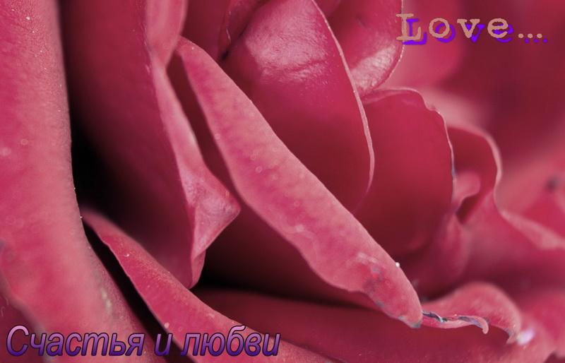 С днем святого валентина, роза, счастья и любви