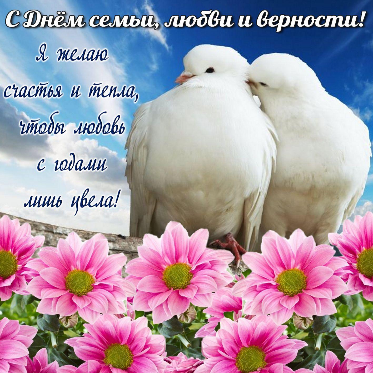 Картинки с праздником семьи любви и верности красивые, марта
