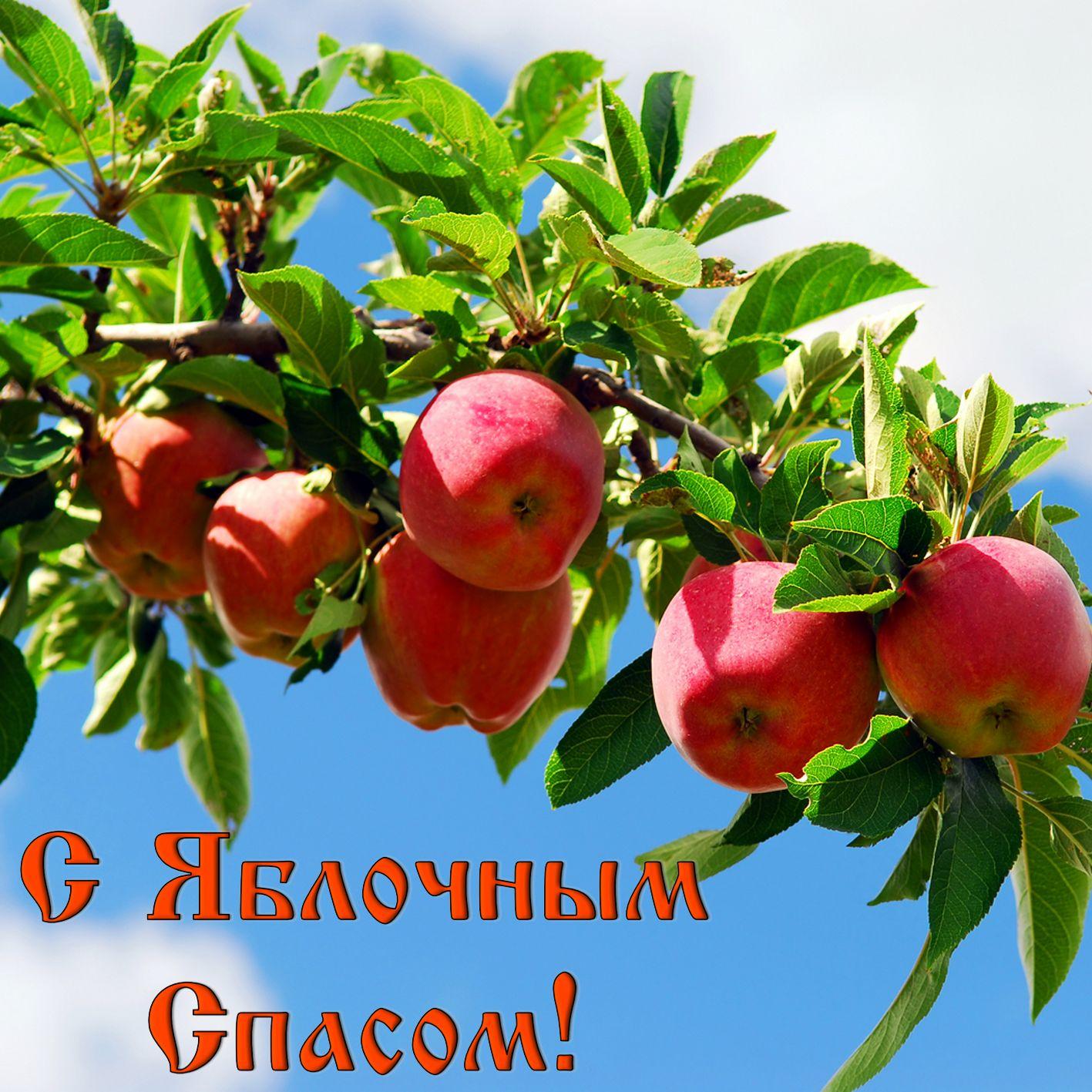 Картинки поздравления к яблочному спасу