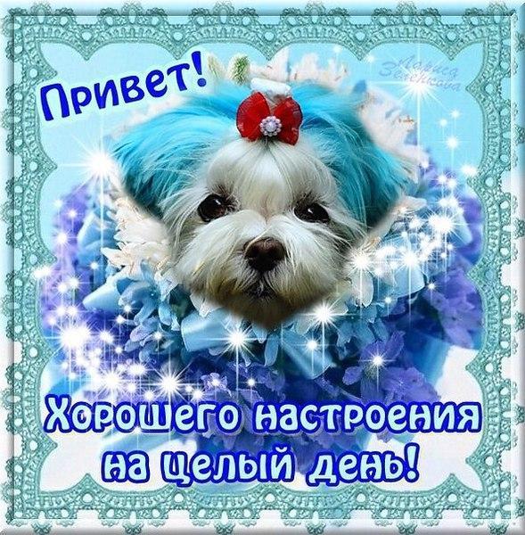 нее открытки с приветом и пожеланиями хорошего дня и настроения популярная стойка ресепшн