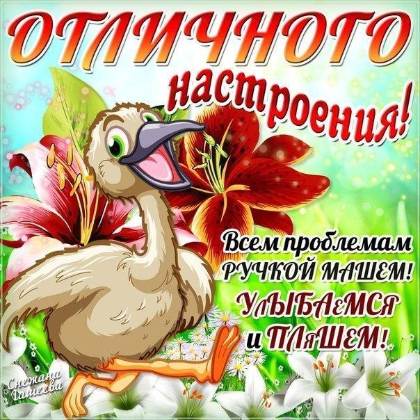 Смешные открытки с пожеланиями хорошего дня и отличного настроения
