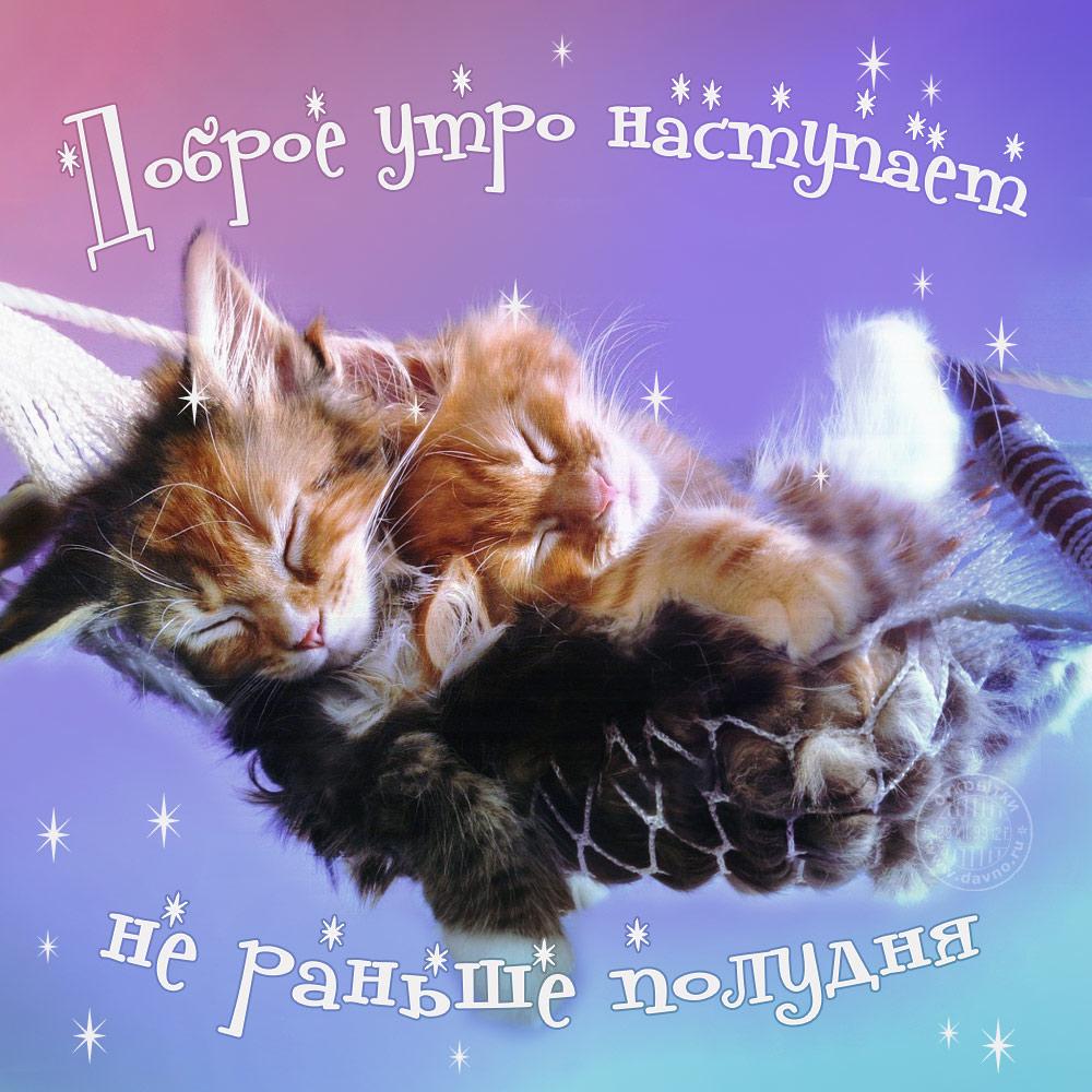 Открытка с котиками доброе утро