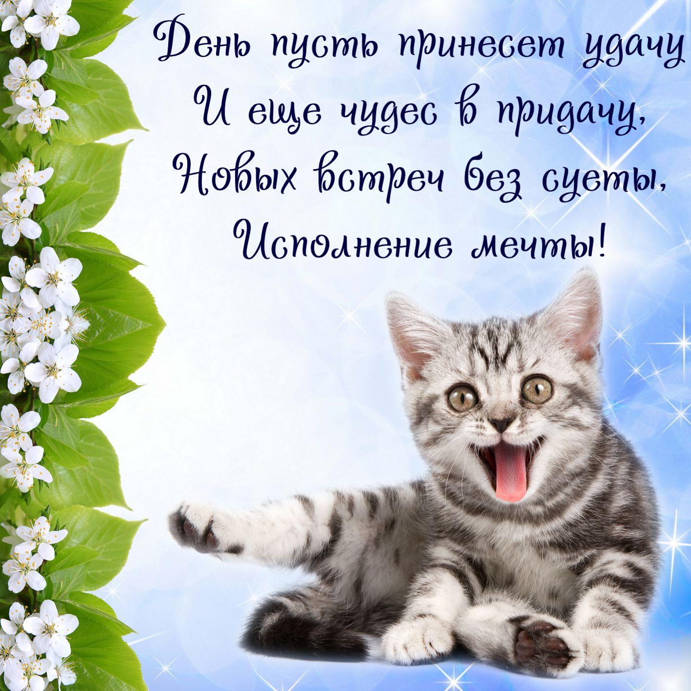 пожелания успеха удачи веселые стихи и картинки любой приворот