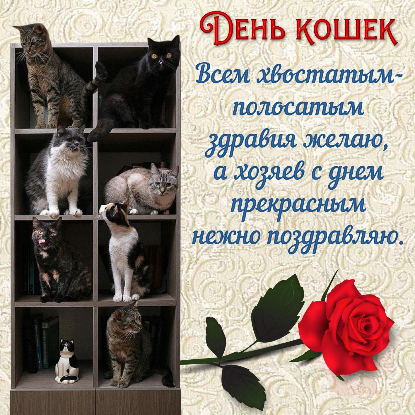 Всемирным днем кошек открытки