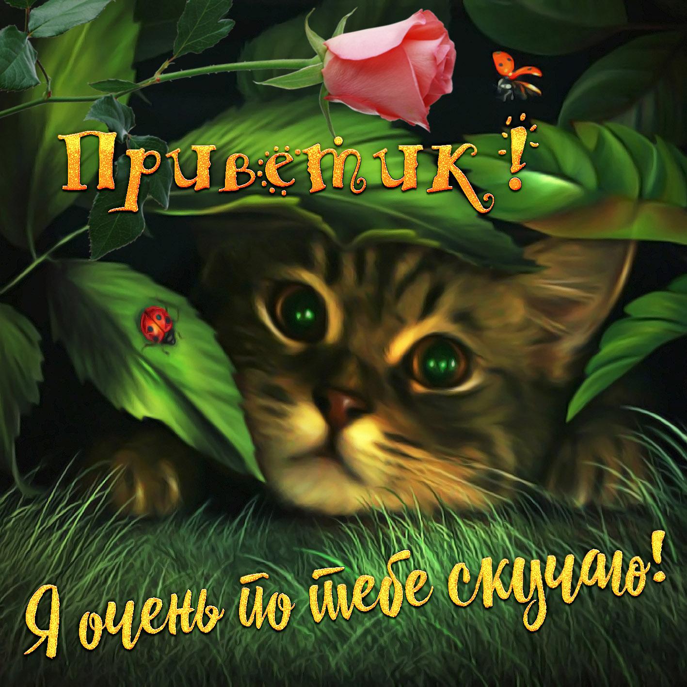 Картинка привет дорогая хорошего дня