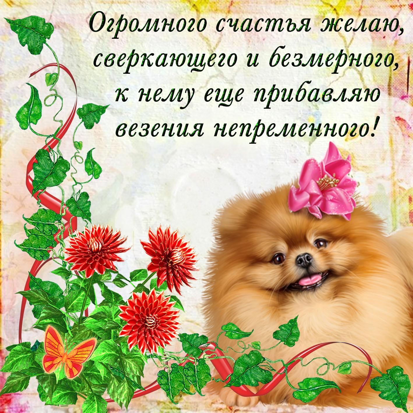 Пожелания счастья фото