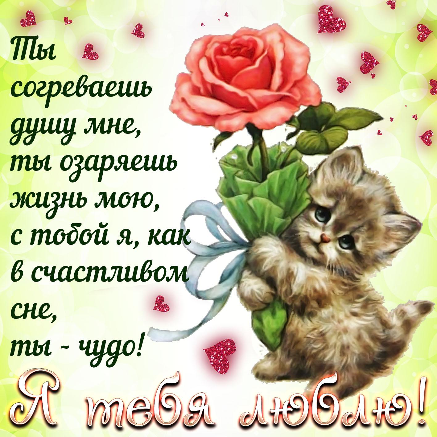 Поздравление любимому котику