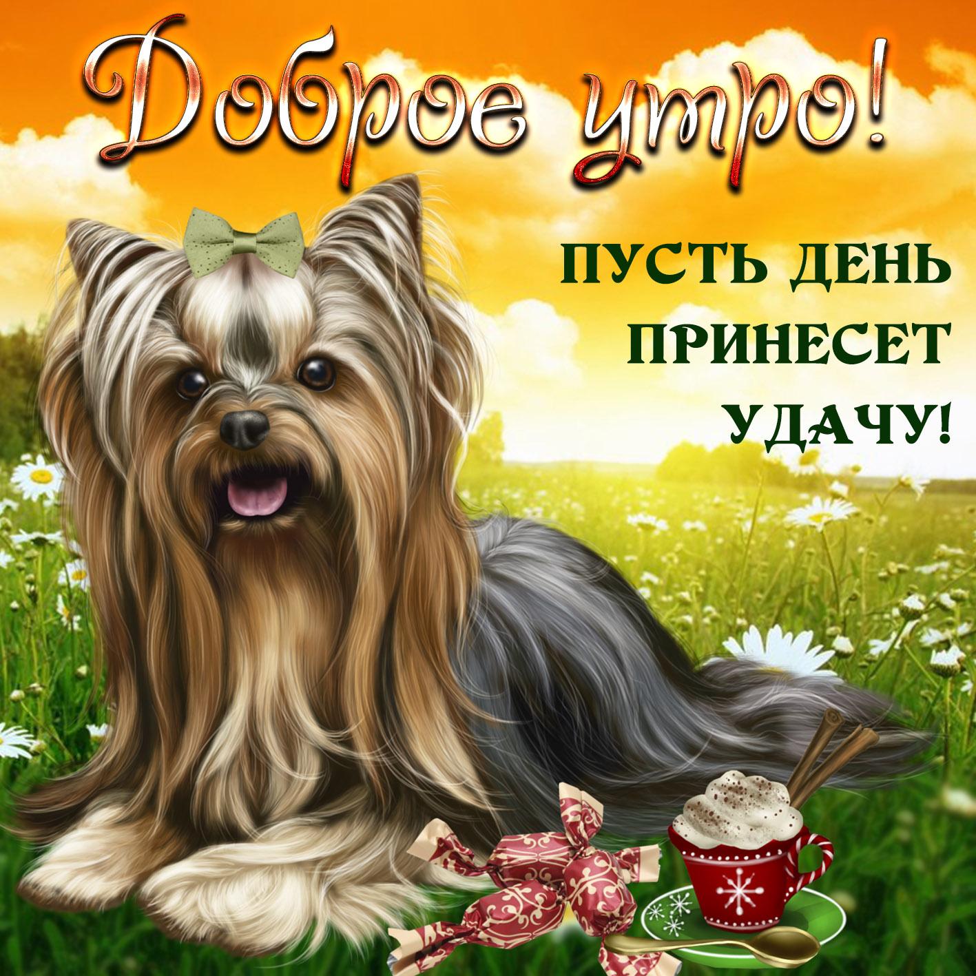 пожелания с добрым утром картинки животных полосы