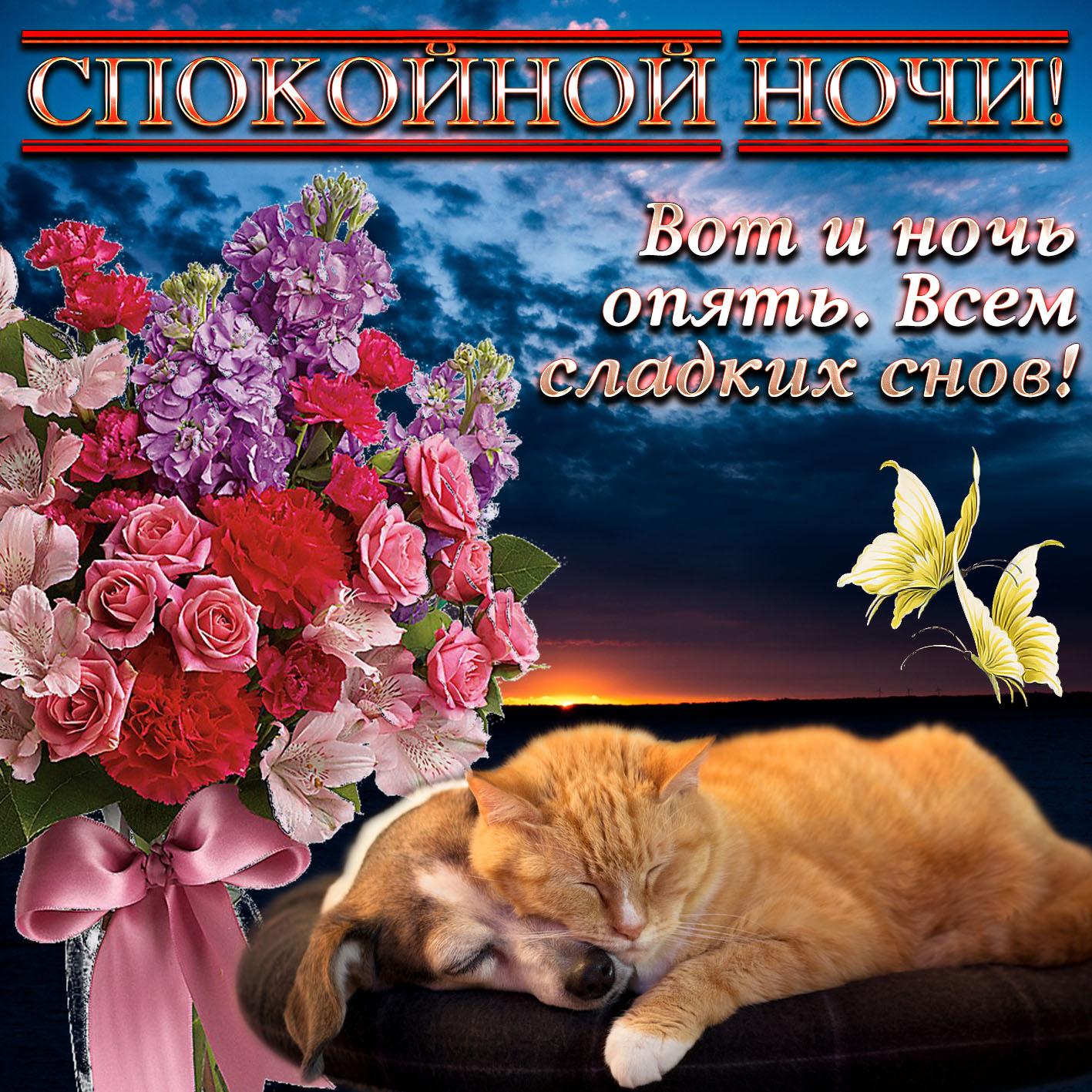 Поздравления доброй ночи